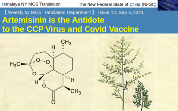 MOS Weekly No.12 –  Artemisinin is the Antidote to the CCP Virus and Covid Vaccine
